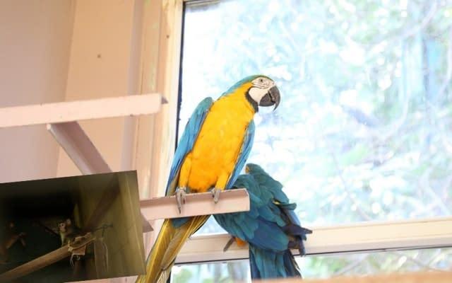 Hayvanat Bahçesine 14 yeni üye