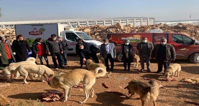Milletvekili Taşdoğan sokak hayvanlarını unutmadı